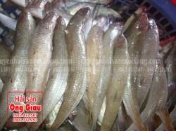 Giá bán cá mối tươi sống ở TPHCM hiện nay