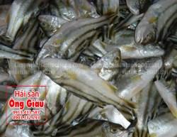 Giá bán cá căng nguyên con ở TPHCM hôm nay bao nhiêu 1kg