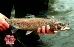 Nơi bán cá hồi vân đỏ tươi sống bao nhiêu 1kg tại TPHCM hiện nay
