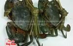 Giá cua sen tươi sống nguyên con bao nhiêu 1kg tại TPHCM