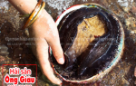 Bào ngư viền đen nhập khẩu Úc giá bao nhiêu 1 kg tại TpHCM