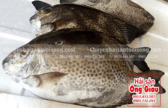 Có bán cá Dìa Bông tươi sống ở Hà Nội không Hải sản Ông Giàu