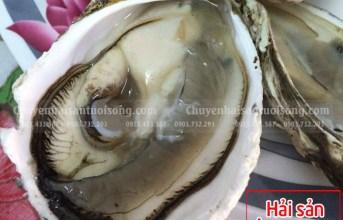 Mua hàu sống tự nhiên ở hải sản Ông Giàu có bán không – giá bao nhiêu