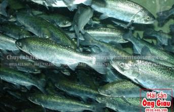 Mua cá sống của Hải sản Ông Giàu về nuôi có được không