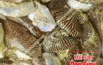 Thịt ốc Giác vàng mua ở đâu bán – giá bao nhiêu tiền 1 kg hiện nay