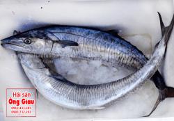 Cá Thu tươi nguyên con giá bao nhiêu tiền 1kg – mua ở đâu bán