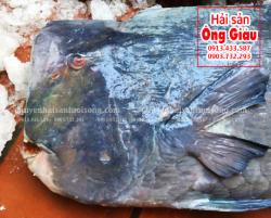 Cá Mó Gù mua ở đâu bán – giá bao nhiêu – làm món ăn gì ngon