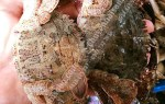 Ghẹ đá biển tươi sống giao hàng tận nơi TpHCM giá bao nhiêu