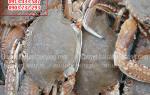 Ghẹ đá – hải sản bổ dưỡng ít người biết – mua ở đâu tại TPHCM
