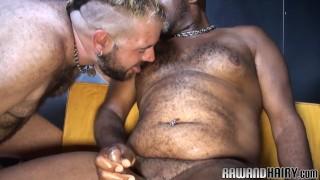 Chubby black bear rims his hairy lover