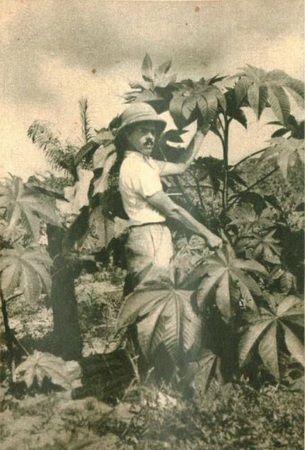 """Jeden z polskich osadników w Liberii na plantacji rycynusu. Zdjęcie opublikowane pierwotnie w miesięczniku """"Morze"""" (nr 11/35)"""