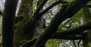 La Forêt des Arbailles