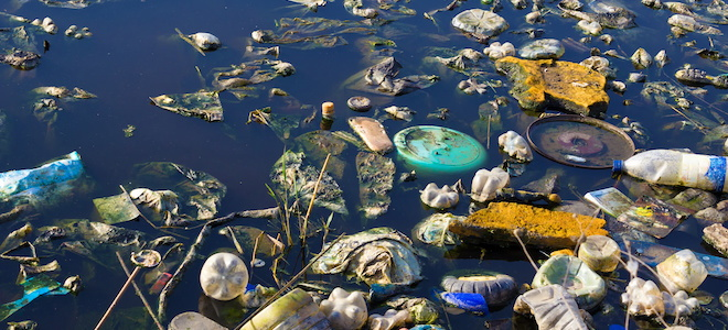 What Are The Effects Of Water Pollution On The Environment