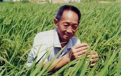 yuan-longping