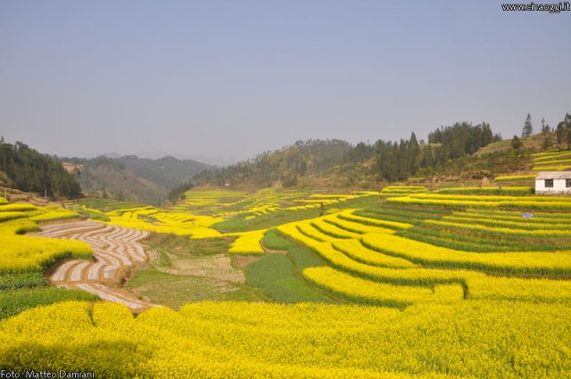 luoping_flowers_yunnan_002