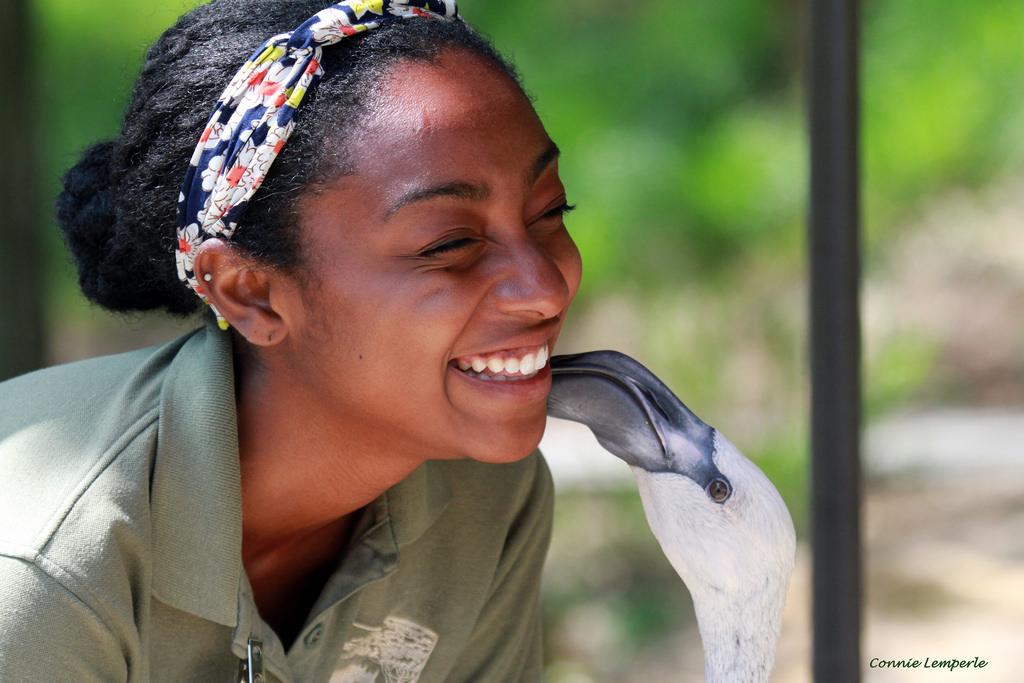 Job Opportunities - Cincinnati Zoo  Botanical Garden - zoo worker sample resume