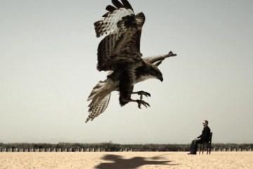 Animal Desert