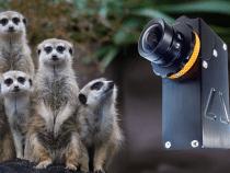 Meerkat Mini Camera: