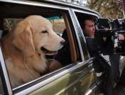 "Behind The Scenes ""BARKFEST"" Nat Geo WILD from CarlalynD"