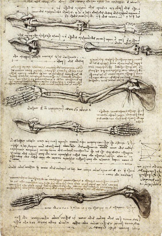 circaa   Leonardo Da Vinci