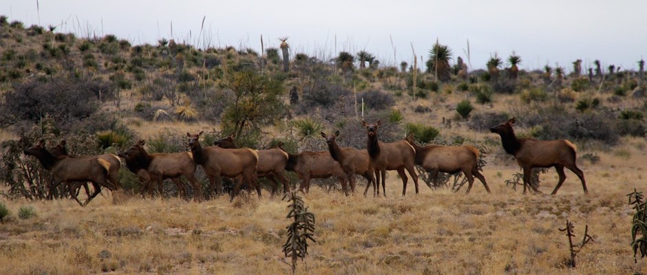 circle_ranch_elk_feature