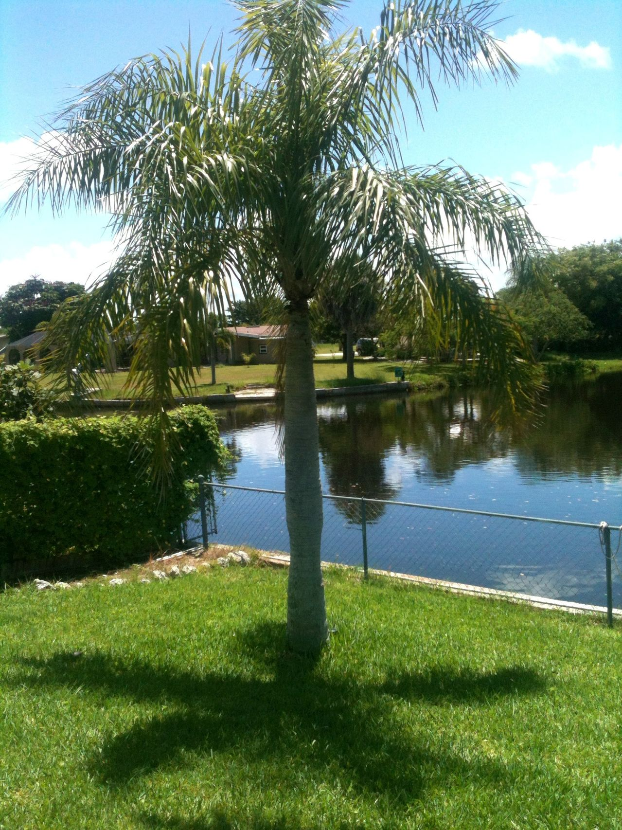 Home Depot Palm Trees Palm Tree Problems Home Depot Buy Professionals Punta Gorda