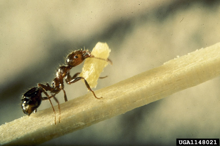 Wallpaper Leaves Falling Controlling Fire Ants In Sensitive Areas Insects In The City