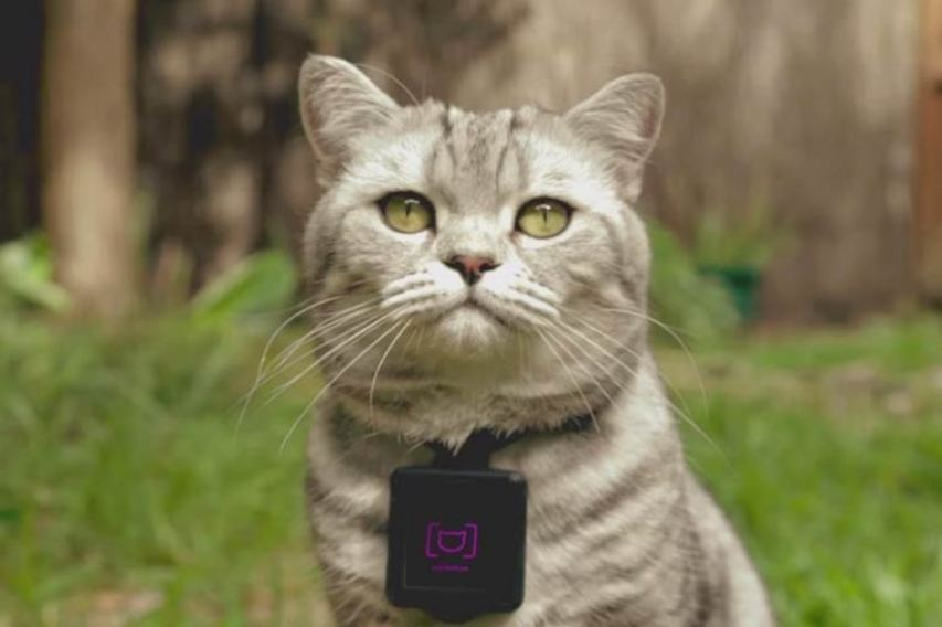 Catstacam 2