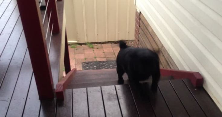 Funny Jumping Puppy Stair Crazy Video Videos Metatube