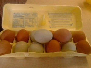 egg carton with brown and green eggs