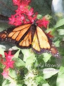 """""""Monarch"""""""