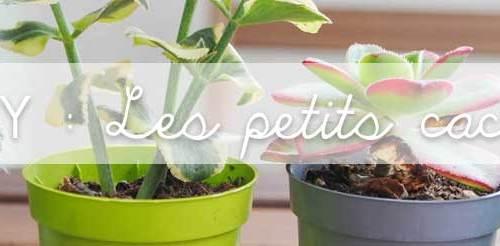 cactus deco balcon jardin diy exterieur plante (2)