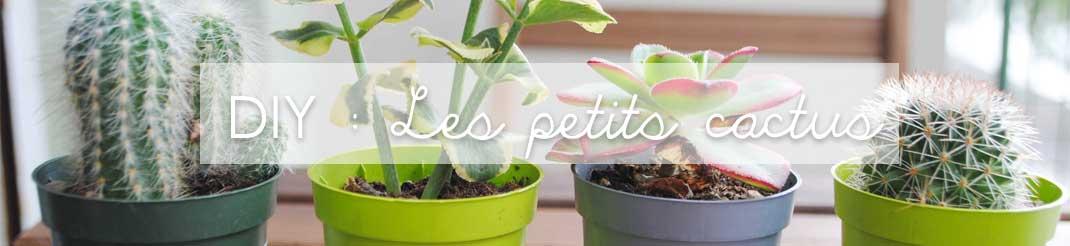 Diy les petits cactus vid o claire 39 s blog - Plante exterieur balcon ...