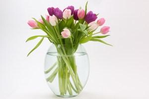 tulip-1230390_1920