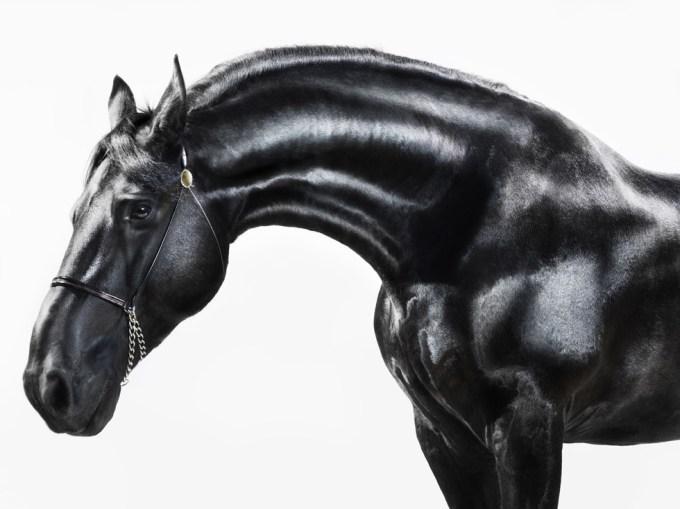 Jill Greenberg, Horses, Hielke 0356