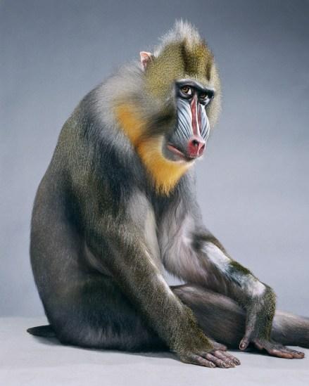 Jill Greenberg, Monkeysuit