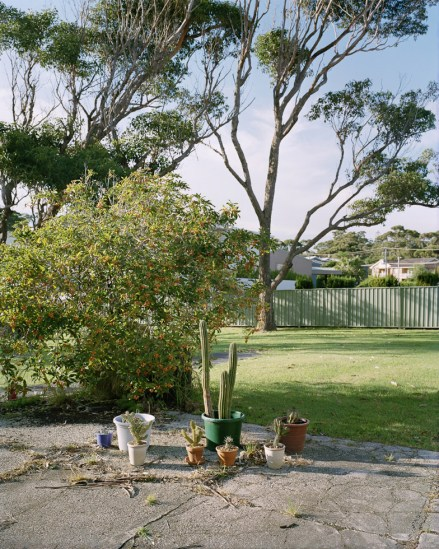 Amy Stein, Plants, Mollymook