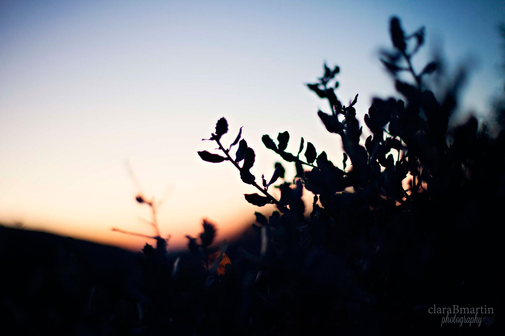 Despierta_fotoclaraBmartin03