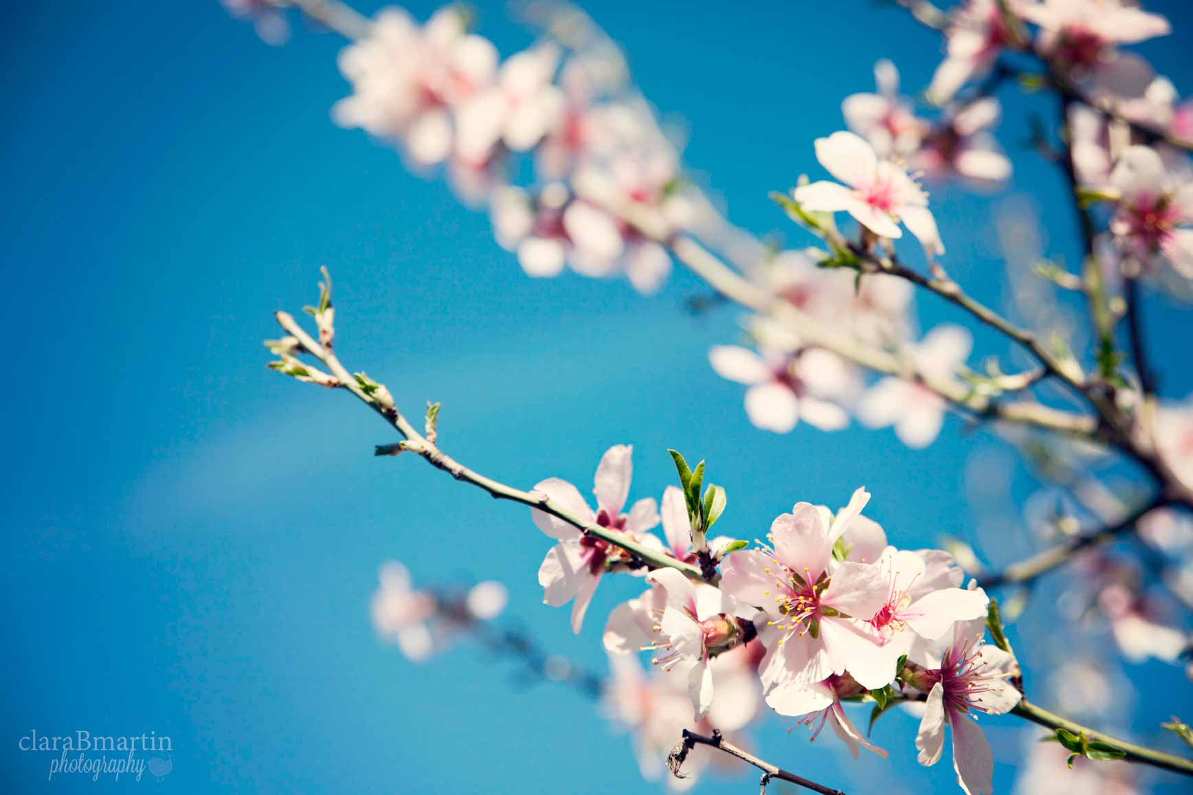 Primavera_claraBmartin06