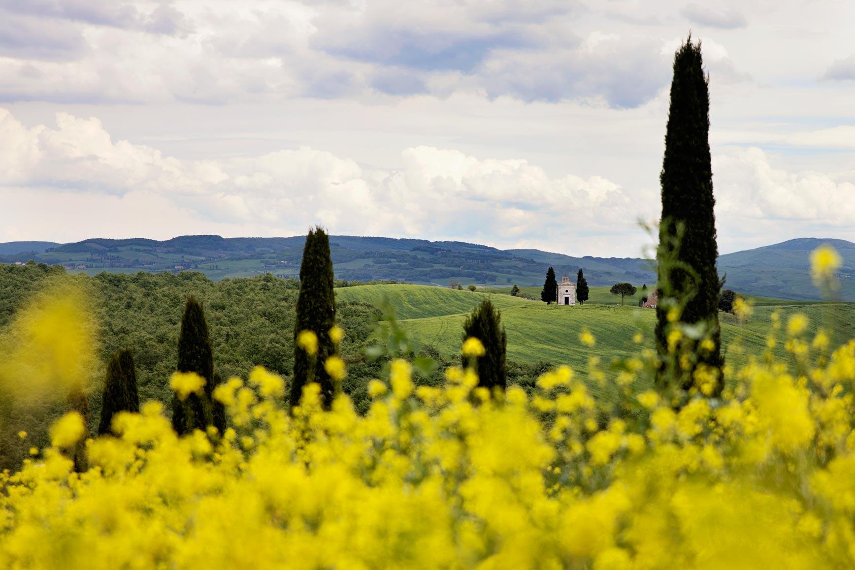 Campos de flores amarillas-claraBmartin-06