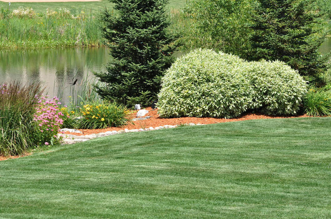 Backyard Clean Up Spring And Fall Clean Up Services Holt Lansing Mi James