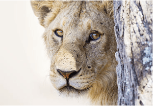 Free Animal Preservation Lesson Plans & Teaching Resources From We Are Teachers 2