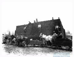 Brick yard where fossils found