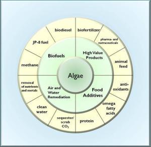 graph_algae