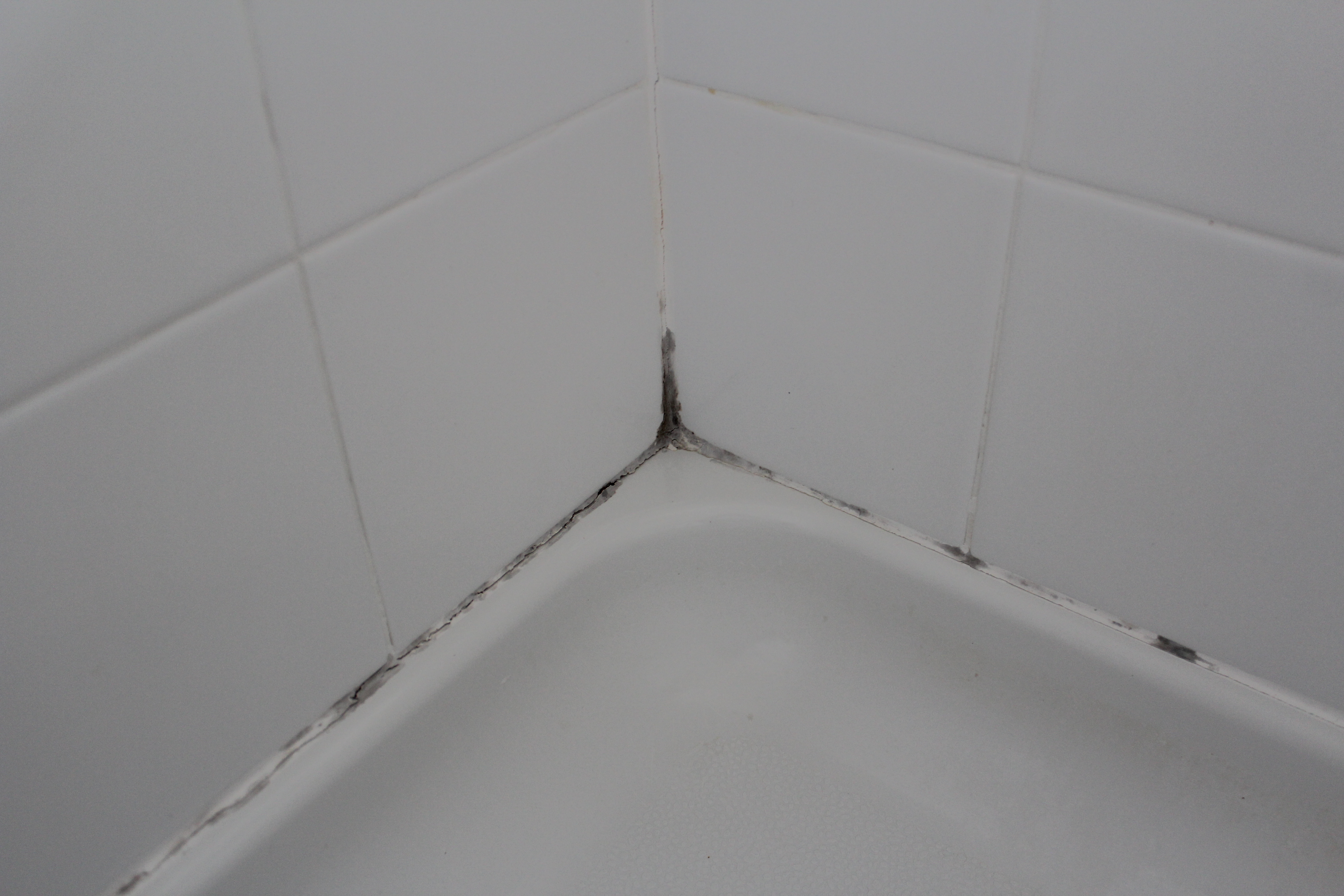 Schimmel Douche The Best Way To Remove Black Mold Out Of Tile Grout