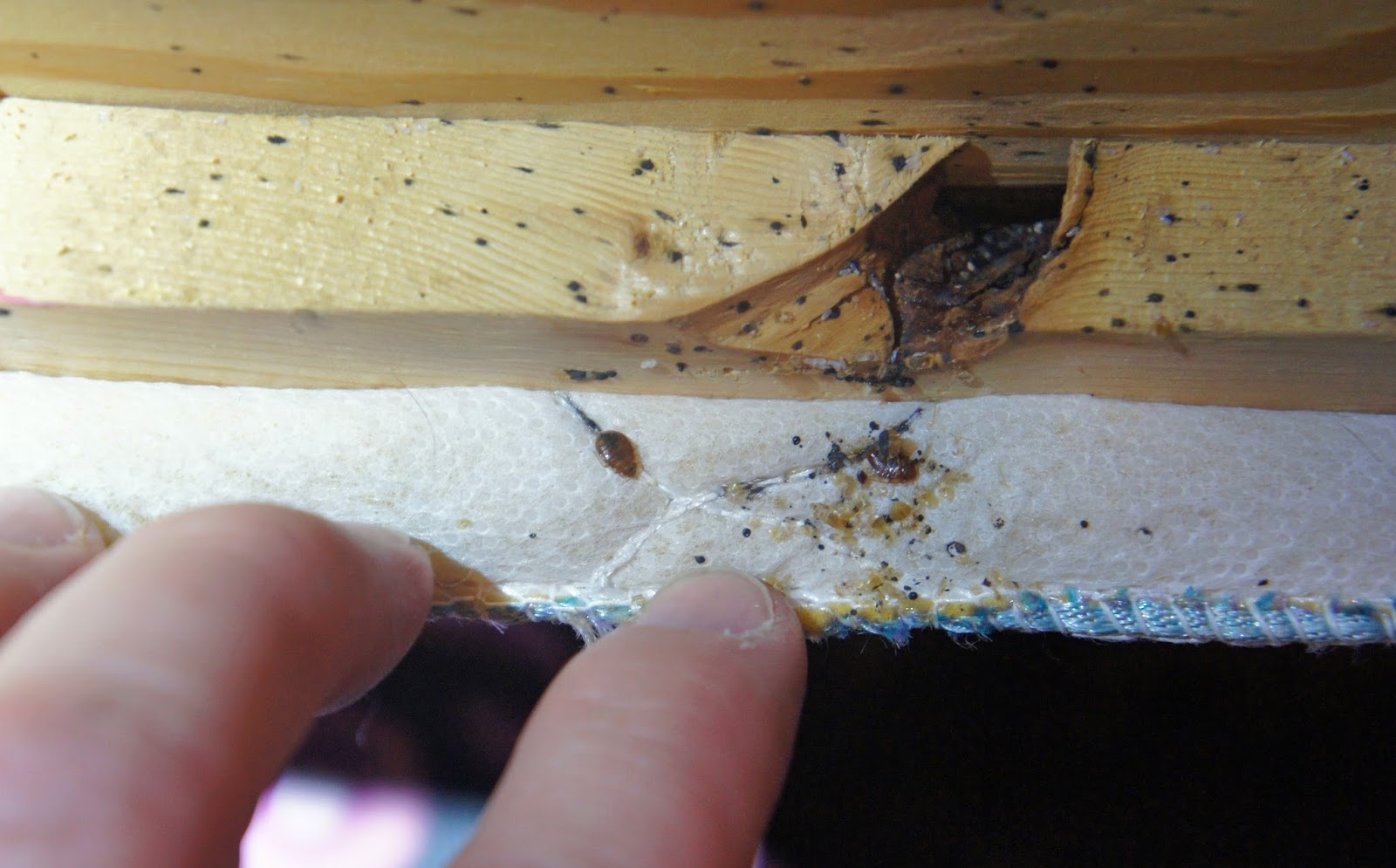 Getting Rid Of Bed Bugs How To Get Rid Of Bed Bugs Permanently