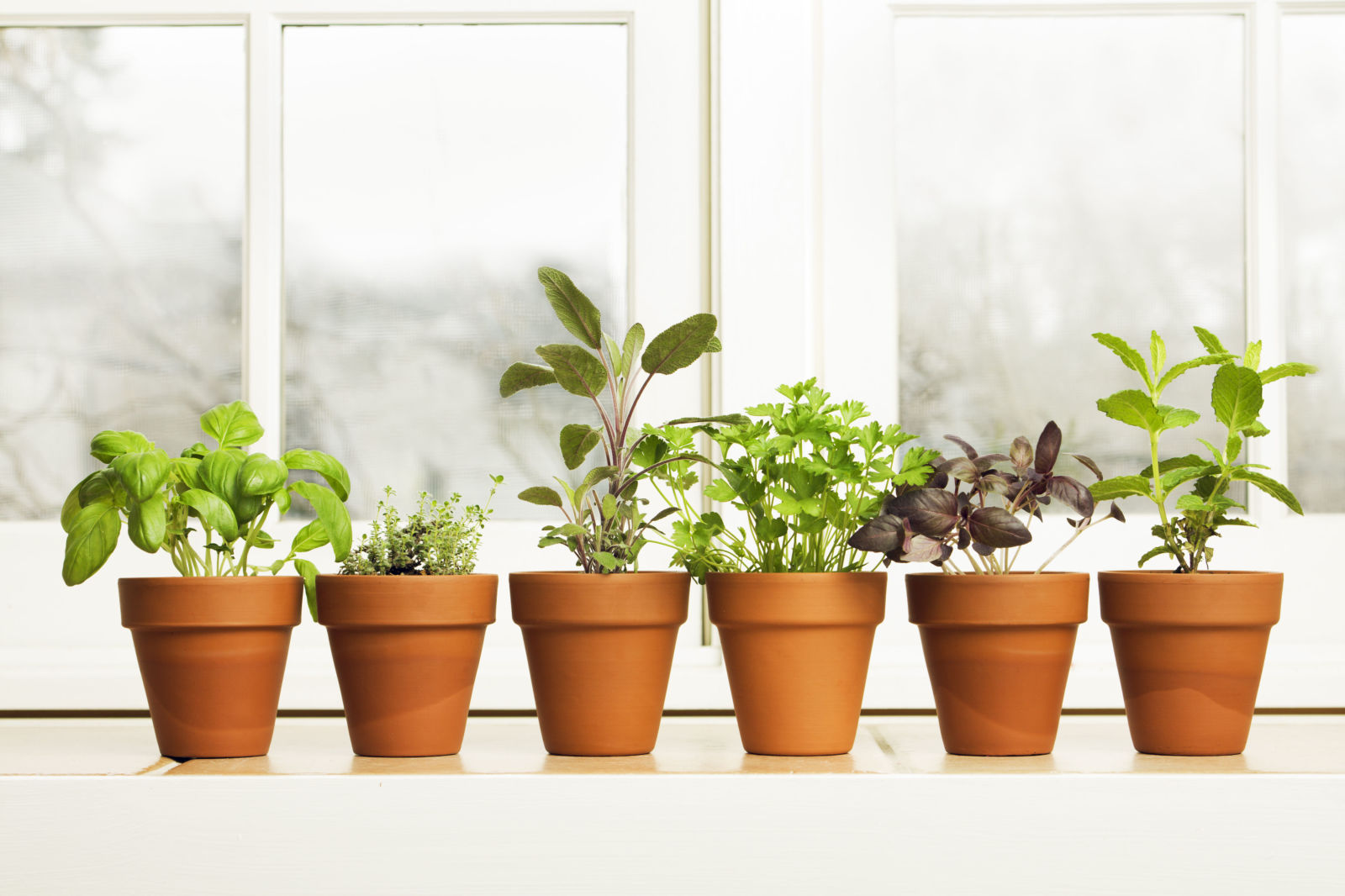 Herb Pots Kitchen How To Grow Herbs And Spices Indoors Clickhowto