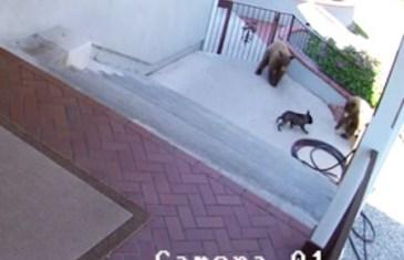 Trespassers Be Bear!