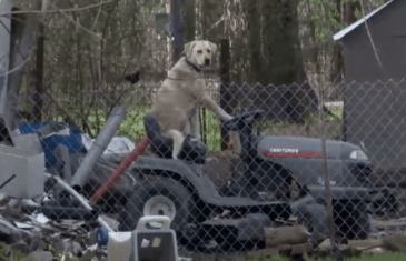 The Mowing Mutt