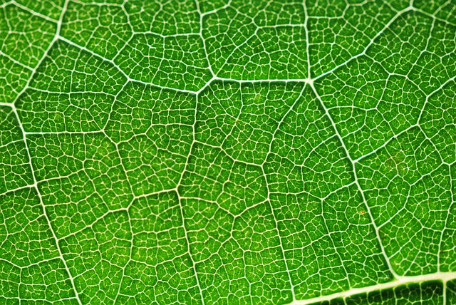 Fall Colors Wallpaper 1920x1080 Nasa Climate Kids Make A Stained Glass Leaf